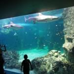 Sharks, Sydney Aquarium