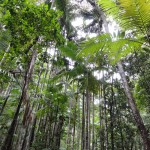 Fraser Island - Rainforest